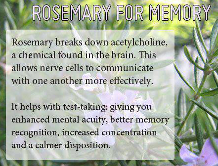Increase-Memory-with-Rosemary